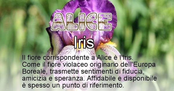 Alice - Fiore associato al Nome Alice