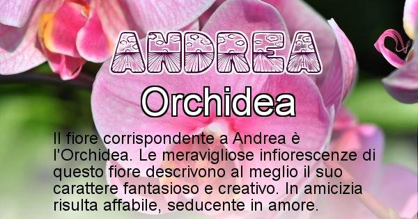 Andrea - Fiore associato al Nome Andrea