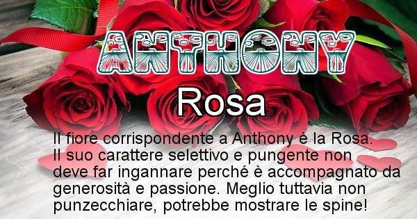 Anthony - Fiore associato al Nome Anthony