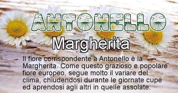 Antonello - Fiore associato al Nome Antonello
