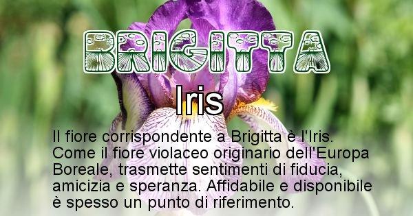 Brigitta - Fiore associato al Nome Brigitta