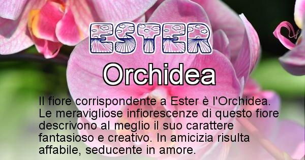 Ester - Fiore associato al Nome Ester