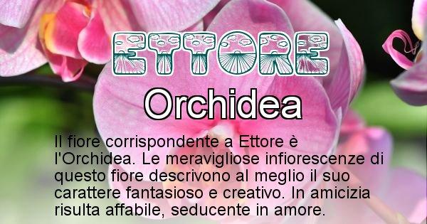 Ettore - Fiore associato al Nome Ettore
