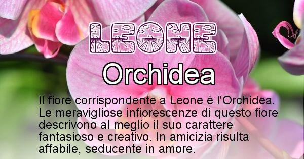Leone - Fiore associato al Nome Leone
