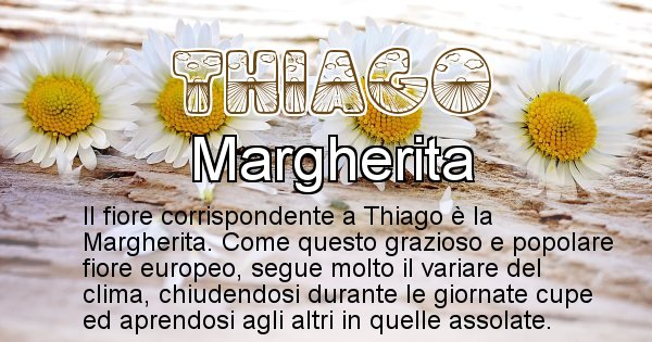 Thiago - Fiore associato al Nome Thiago