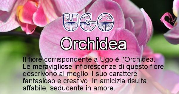 Ugo - Fiore associato al Nome Ugo