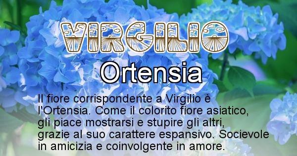 Virgilio - Fiore associato al Nome Virgilio