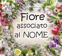 Fiori Nomi E Foto.A Quale Fiore Corrisponde Il Nome